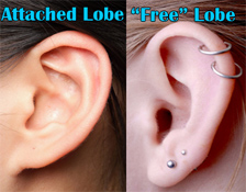 Attached-Unattached-Ear-Lobes
